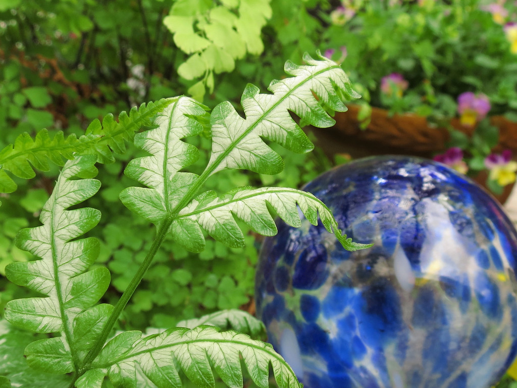 A Brake Fern and Colorful Glass