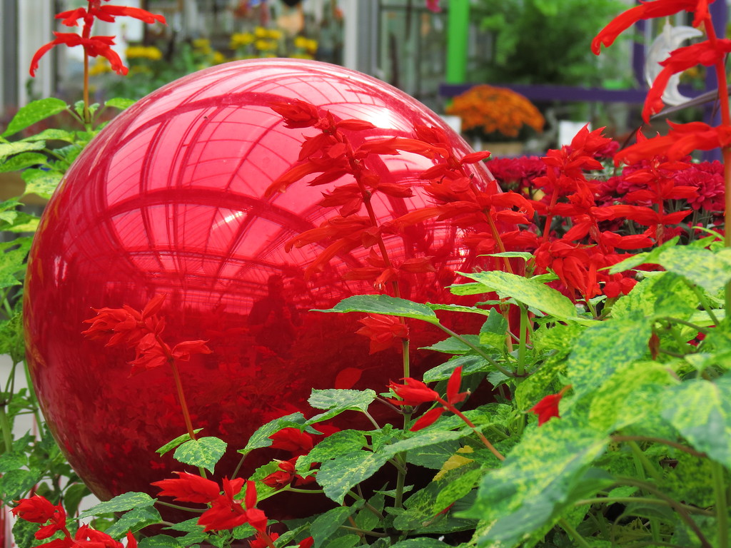 Red Gazing Globe and Red Salvia.