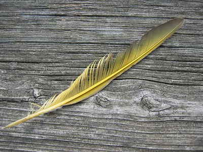 The yellow feather... that we talked about.