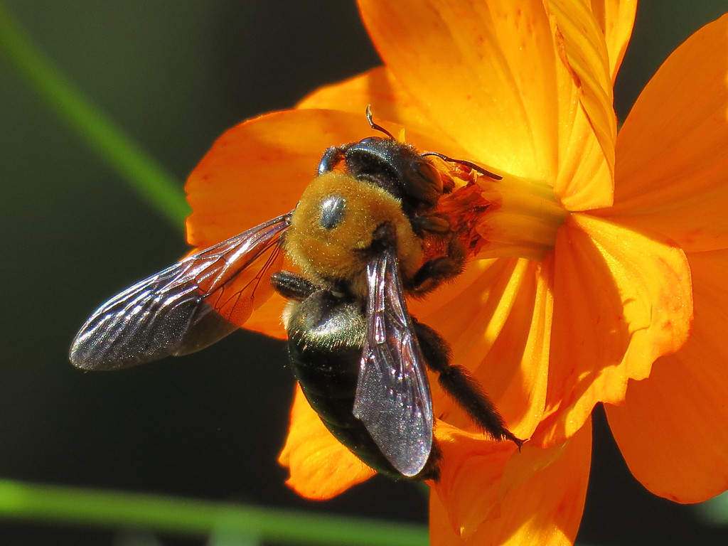 Bee On a Sunny October Afternoon.