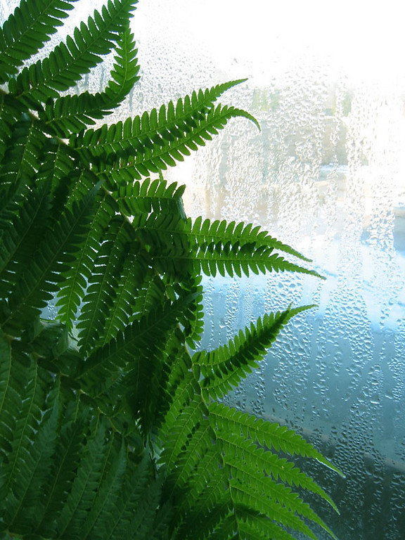 Ferns, glass and water.<br /> Shot inside the Powell Gardens visitor center on a cold winter day.