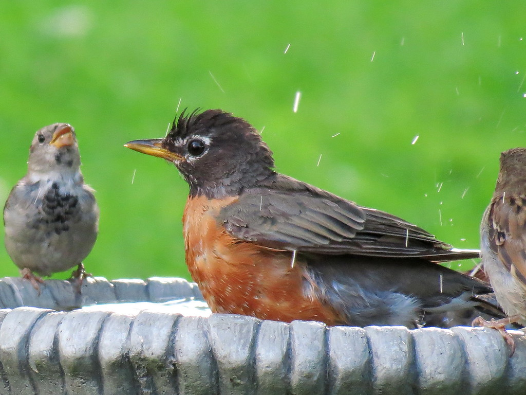 Robin and Friends in bath.